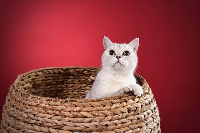 kočka v košíku.jpg